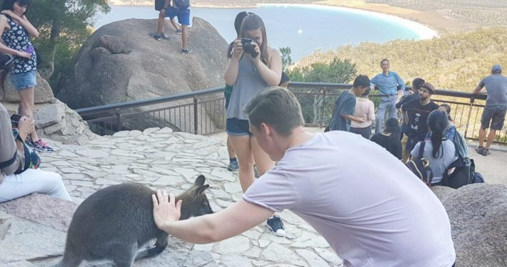 Wineglass Bay Tour, Hobart, Tasmania, Wineglass Bay Day Tours, pat kangaroo